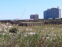Smyrna Dunes Park looking toward the condominiums