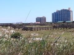 Smyrna Dunes Park looking toward the condominiums
