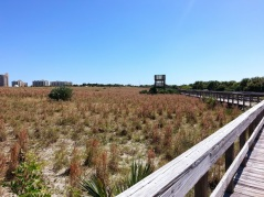 Smyrna Dunes Park observation tower